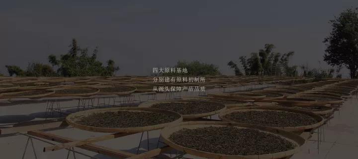 【陈升号】坐落于四大名山的初制加工所---原料篇