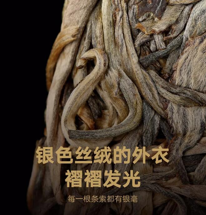 一口喝掉9892棵茶王树是种什么体验?