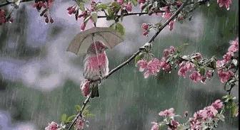 """煮一片陈皮,享受不""""湿""""的春天……"""
