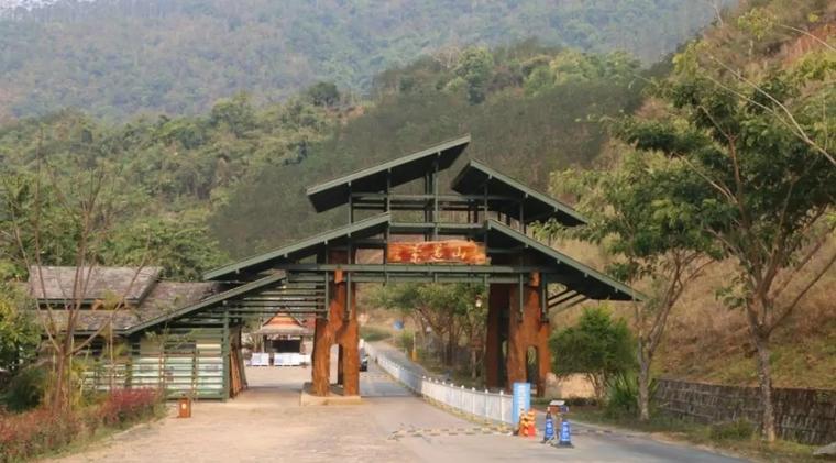 景迈茶山记实在云海中生长的千年万亩古茶园!