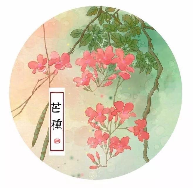 【芒种】炎夏多喝茶,祛暑益气,生津止渴