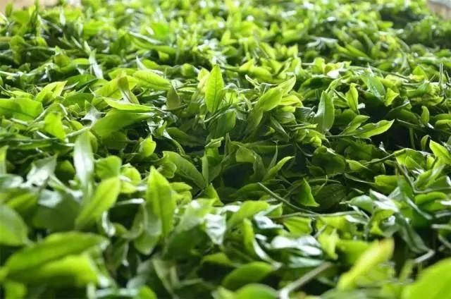 古韵流香2018春茶全面上市