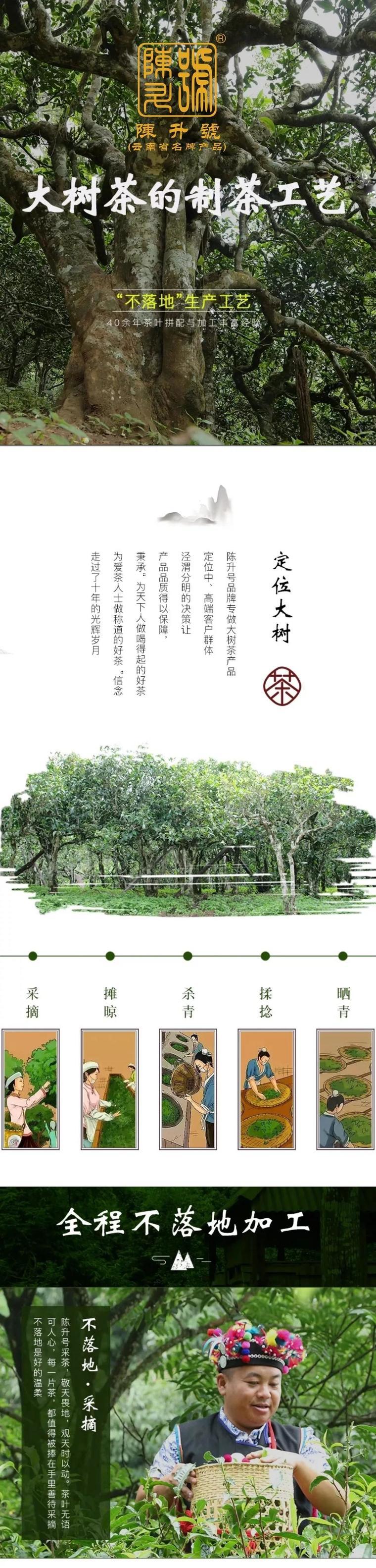 陈升学堂|『从茶树到茶杯』陈升号大树茶的制作过程