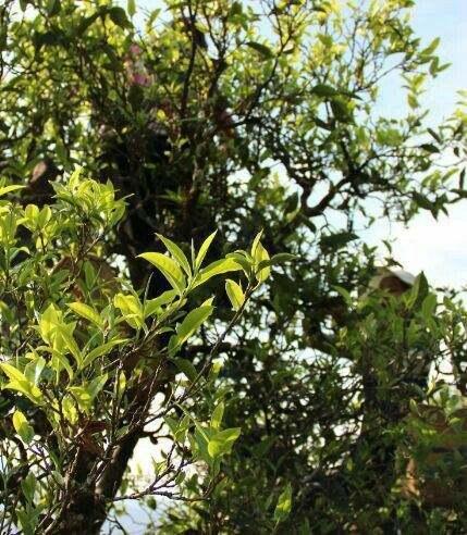 茶园土壤环境检测