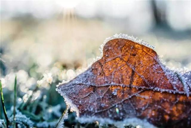 【冬至】冬至将至,你知道冬至如何养生吗?