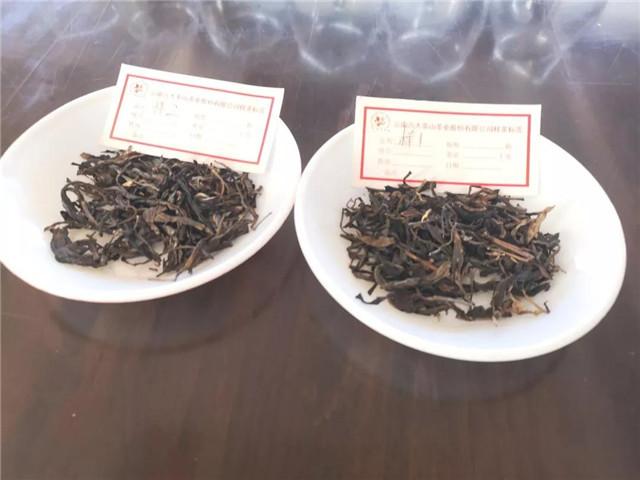 【勐海茶厂品鉴会】品一壶好茶,得一份清闲
