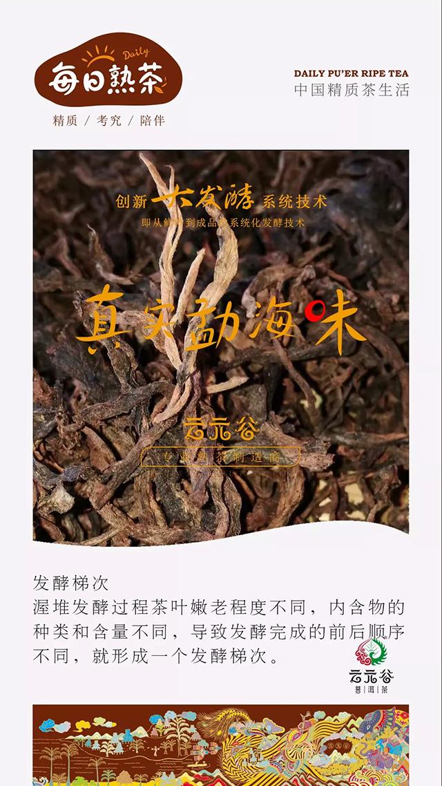 """云元谷每日熟茶丨""""大发酵""""之【发酵梯次】"""