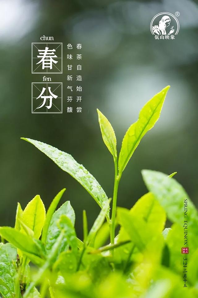 佤山映象:春分,春色与茶色平分