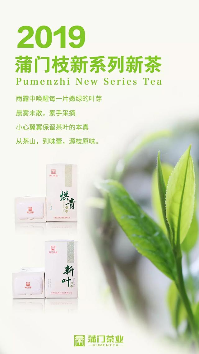 蒲门茶业:新品上市|夏日必备,口粮绿茶