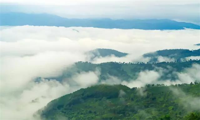 柏联2017典藏古树茶,典千年茶文化藏万亩景迈情
