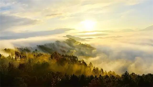 柏联2017典藏景迈香,慧美岁月幽韵典藏