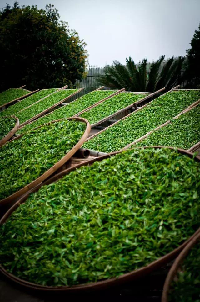 """一年一度的开茶节又要到了,裕荣香人逐渐感觉到了繁忙。   但是今天我们忙里偷个闲,趁机沉浸在往年裕荣香茶园之旅里那些有关春天的小细节里。    每年竹编斗笠是我们给爬山人的一个标配。这个草帽不仅仅可以遮阳,也可以挡雨,对于以前风雨无阻的茶人来说,一顶竹编斗笠承载了太多的意义    裕荣香所在茶园的古道缝隙之间充满了生机。不但有新鲜长出如细胞的""""生命"""",且有渊源不断随春而生的""""血液""""    我们为求独特的饮茶体验,同时为茶友们特别定制了竹制的茶瓢。过去人的"""