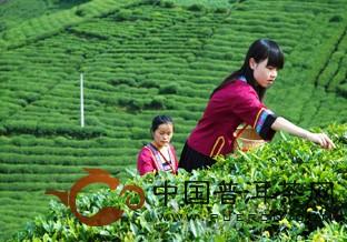 中国普洱茶网