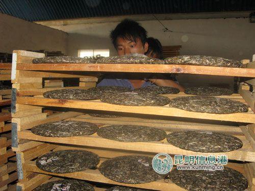 普洱茶生产