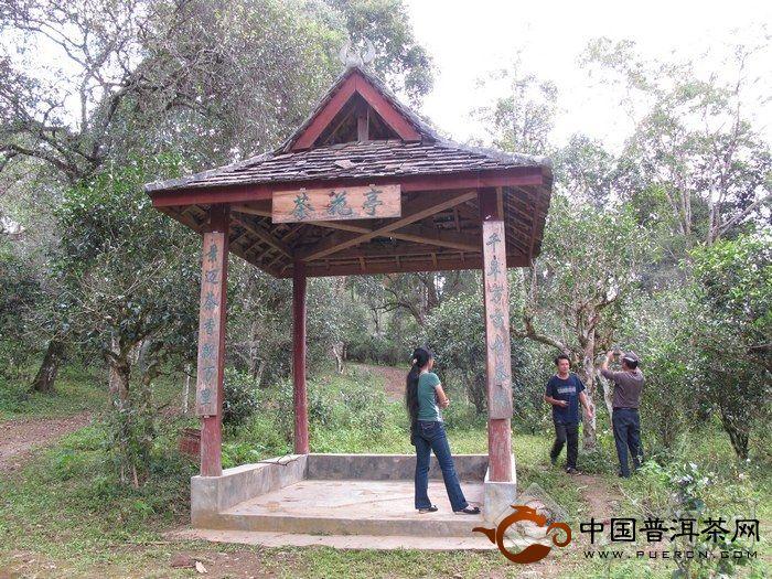 茶园亭子风景图