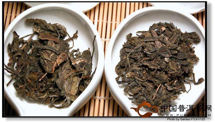 普洱野生茶、台地茶、野放茶的区别