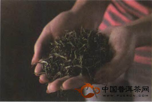 普洱茶的加工工艺