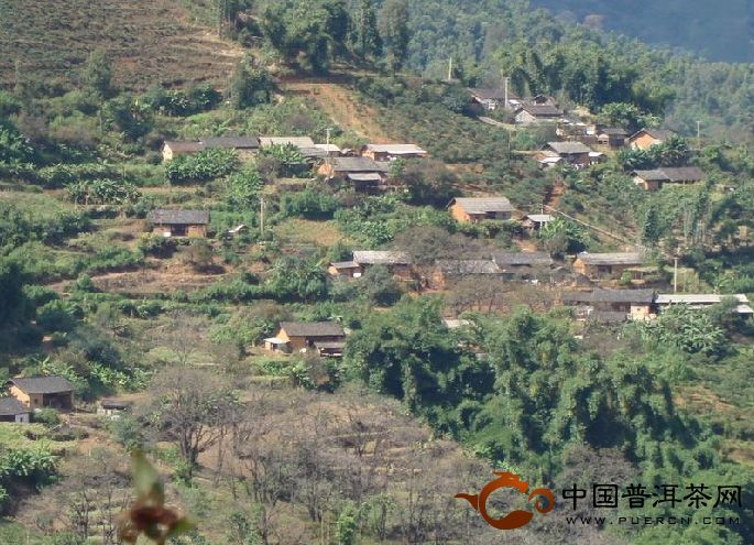 临沧茶区之勐库坝气山