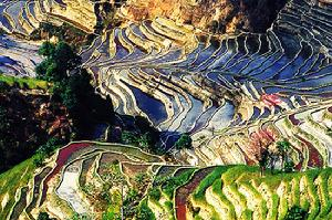 双江、凤庆、临仓亦是普洱茶的重要产区