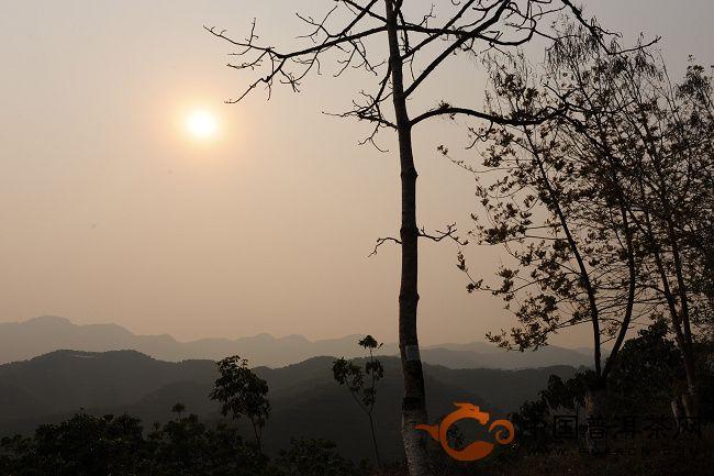 2012年细说普洱——山蓝(六十二)