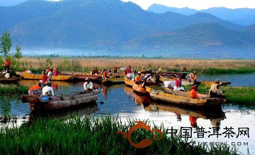 云南思茅地区和西双版纳州的普洱茶风俗