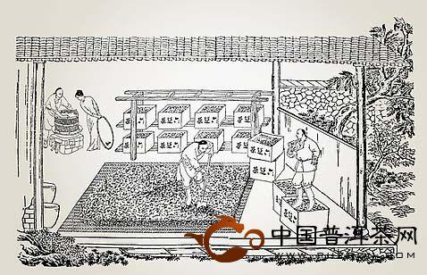 """中国""""制茶技术""""的发展历程是怎样的?"""