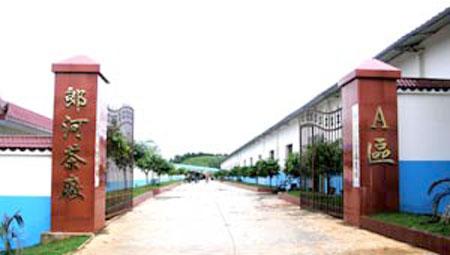 勐海县郎河茶厂