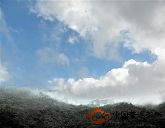 茶树长在云天外