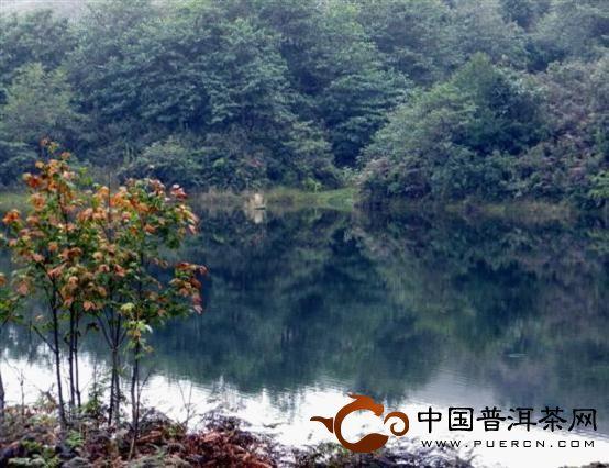 古茶园中的天然湖泊实景二