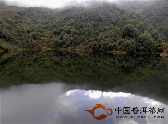 古茶园中的天然湖泊实景一