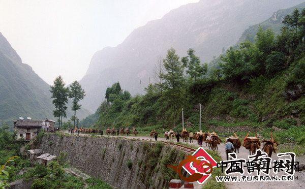 云南茶产业的持续健康发展