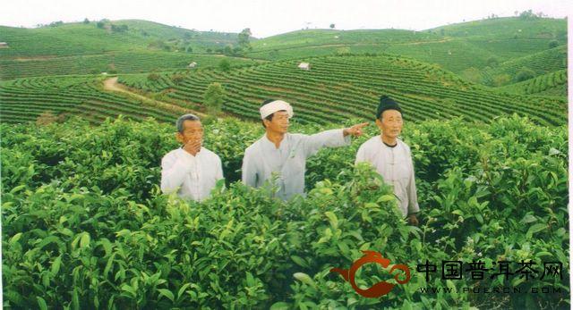 景迈茶文化的历史