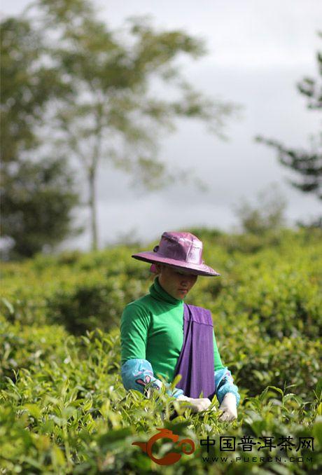 吉盛祥普洱茶生态文化产业园风景