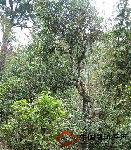 勐库坝歪寨、懂过茶山、大户寨等茶山的生态指数