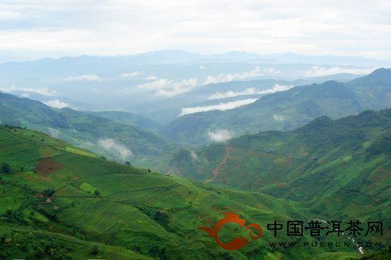 永德大雪山忙肺茶山、曼来茶山、放牛场茶园的生态指数