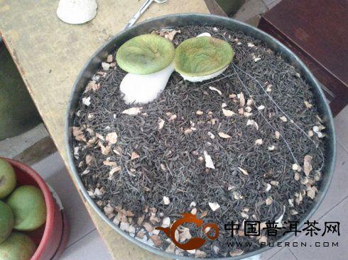 自制柚子普洱茶,柚子普洱茶的做法