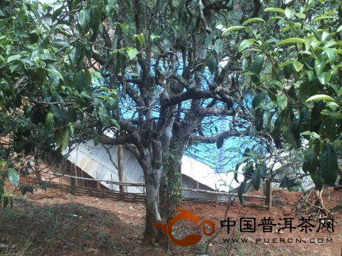 茶山拾趣——老班章村