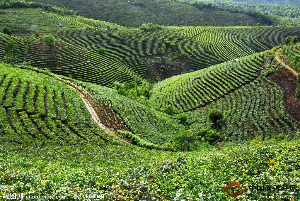 茶叶叶面肥农药 茶宝图片