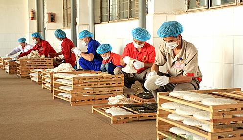 黄山毛峰采制 - 茶叶制作过程_为您介绍茶叶制作工艺