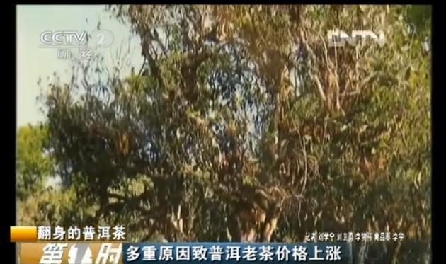 [CCTV2第一时间]翻身的普洱茶视频