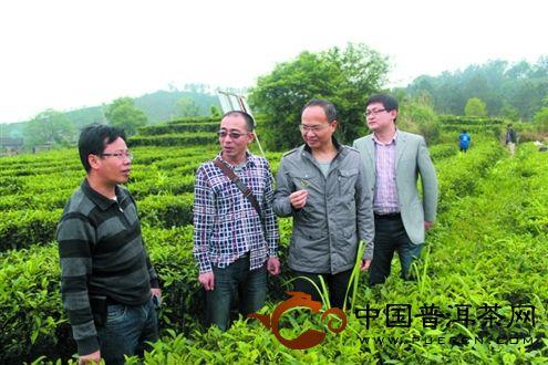 中茶六堡茶茶市新热点_IM电竞