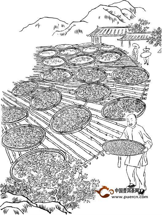 岩茶传统制作技艺简笔画