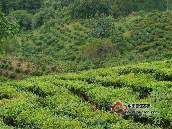 【益心泉·雨婷说茶】寻茶问源:大美生态园帕蚌组图