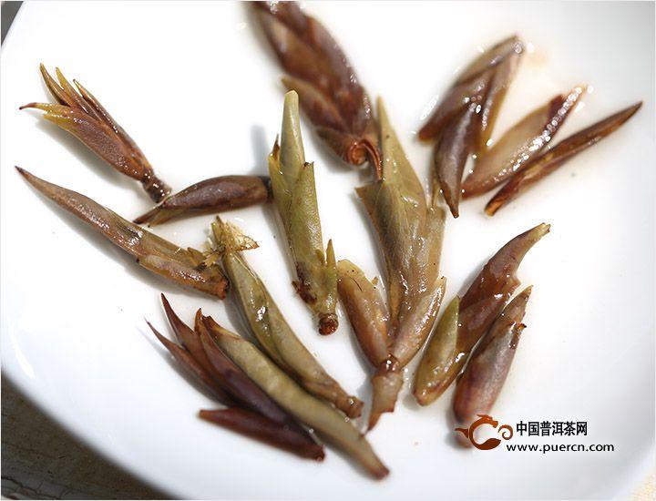 书剑普洱大雪山野生茶芽孢05