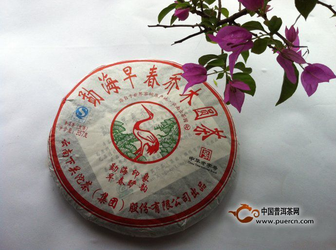 勐海早春乔木圆茶开汤分享