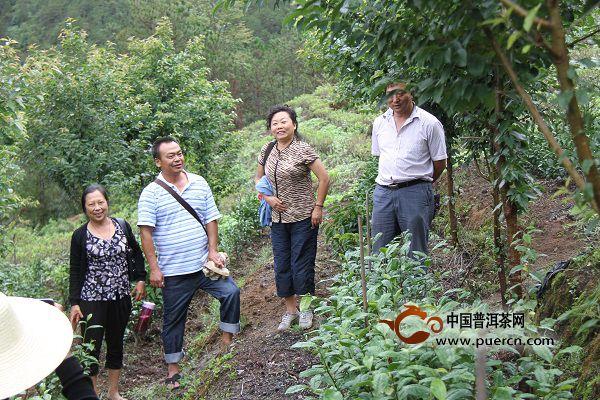 科技人员到南涧指导茶树新品种农业协作试验示范工作