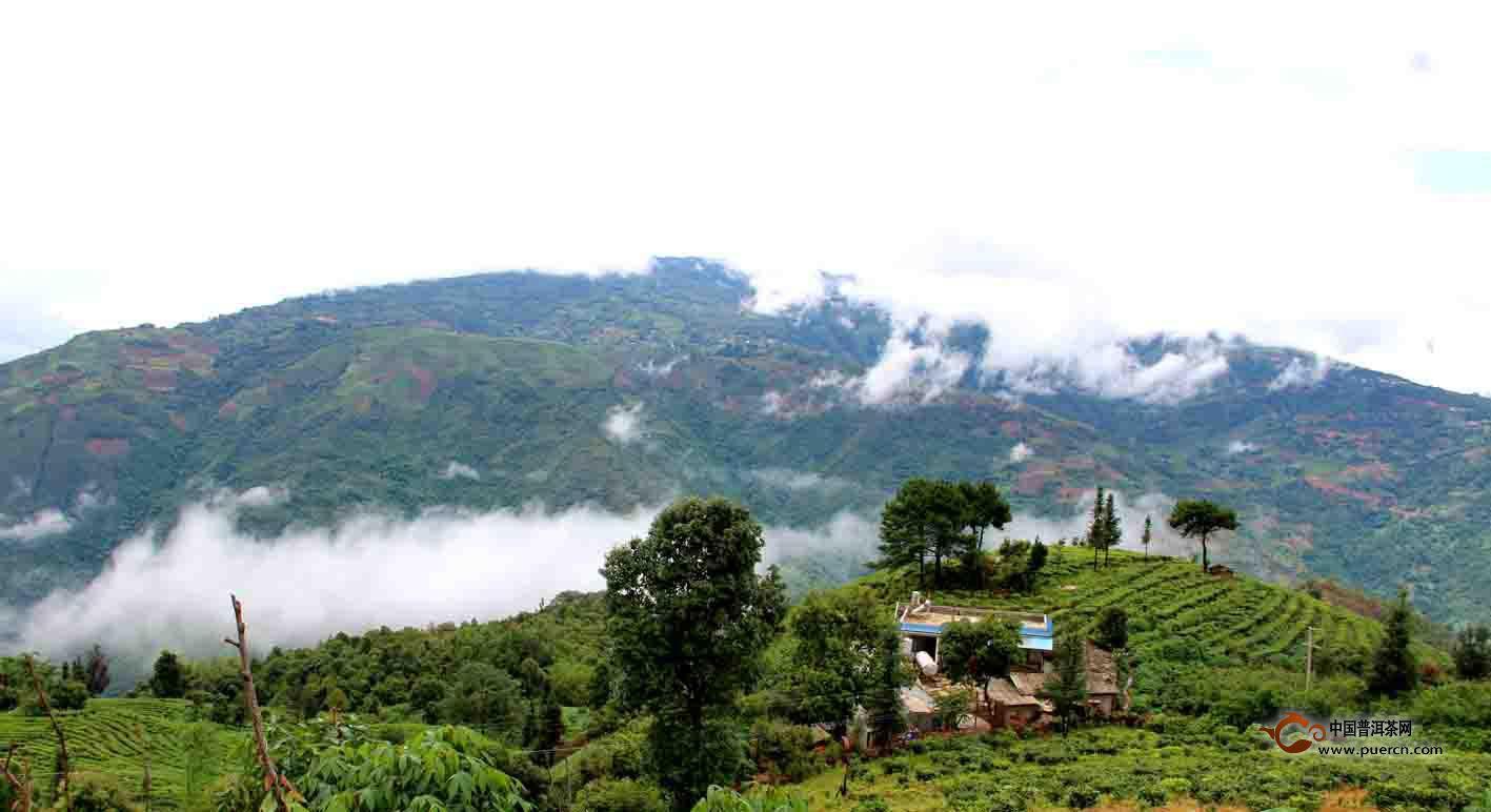 邦丙对岸的邦崴古茶山