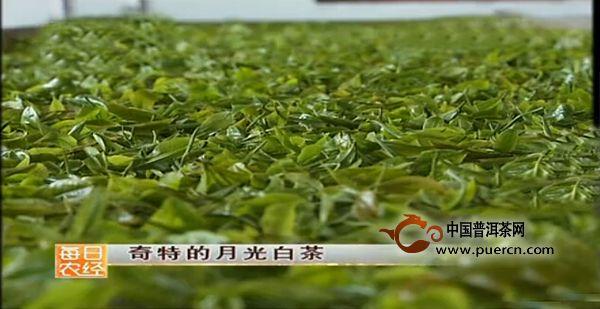 【今日话题】月光白茶到底属不属于普洱茶?