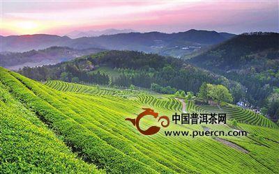"""宁德蕉城:天山绿茶""""讲古"""""""