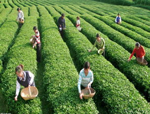 盘点那些土豪也任性不能的茶「贵到你忧伤」